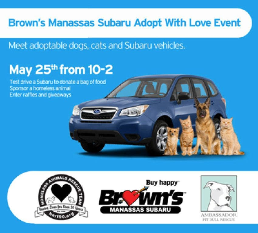 brown s manassas subaru adopt with love event manassas va patch patch