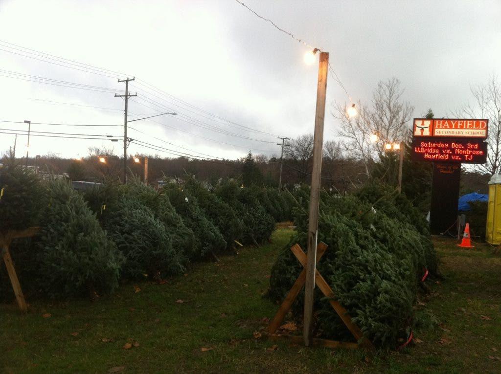High School Christmas Tree Vendors Ready to Sell