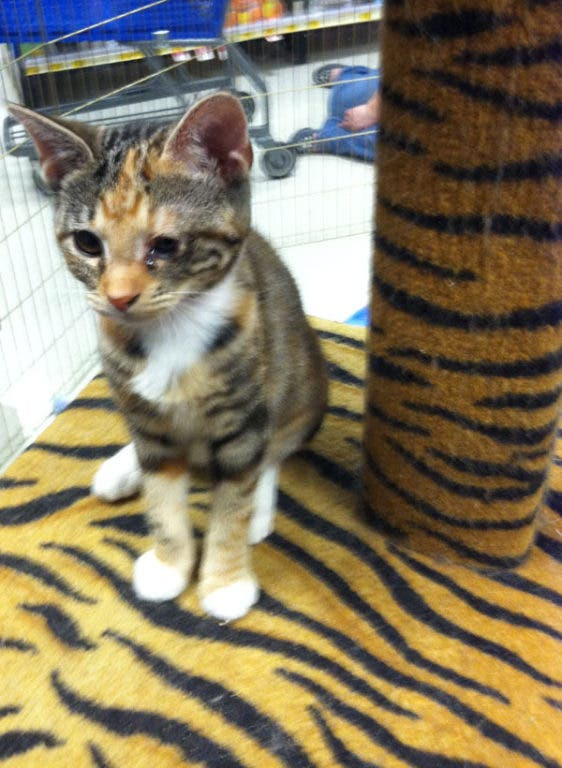 Meet Molly: A Wild Girl from Miami   Midtown, GA Patch