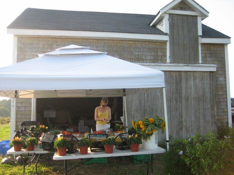 Rhode Island Nurseries Plants Case For Roadway 0