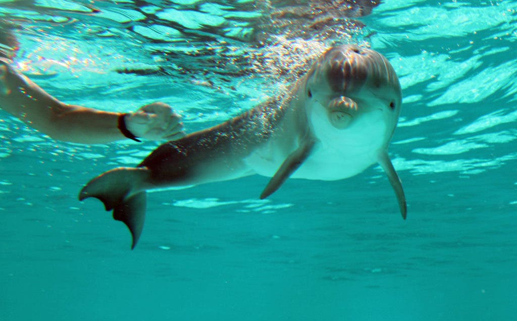 Latest Rescued Dolphin Offers 'Hope' at Clearwater Marine