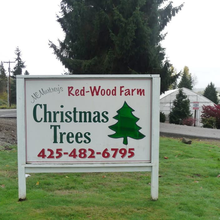 Local Christmas Trees: Sammamish Valley Farm A Local Christmas Tree Tradition