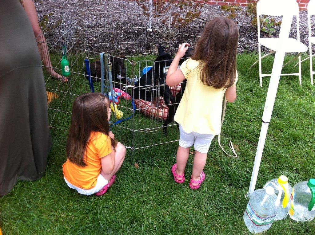 Last Chance Pet Adoption Sunday At Petsmart Port Jefferson Ny Patch