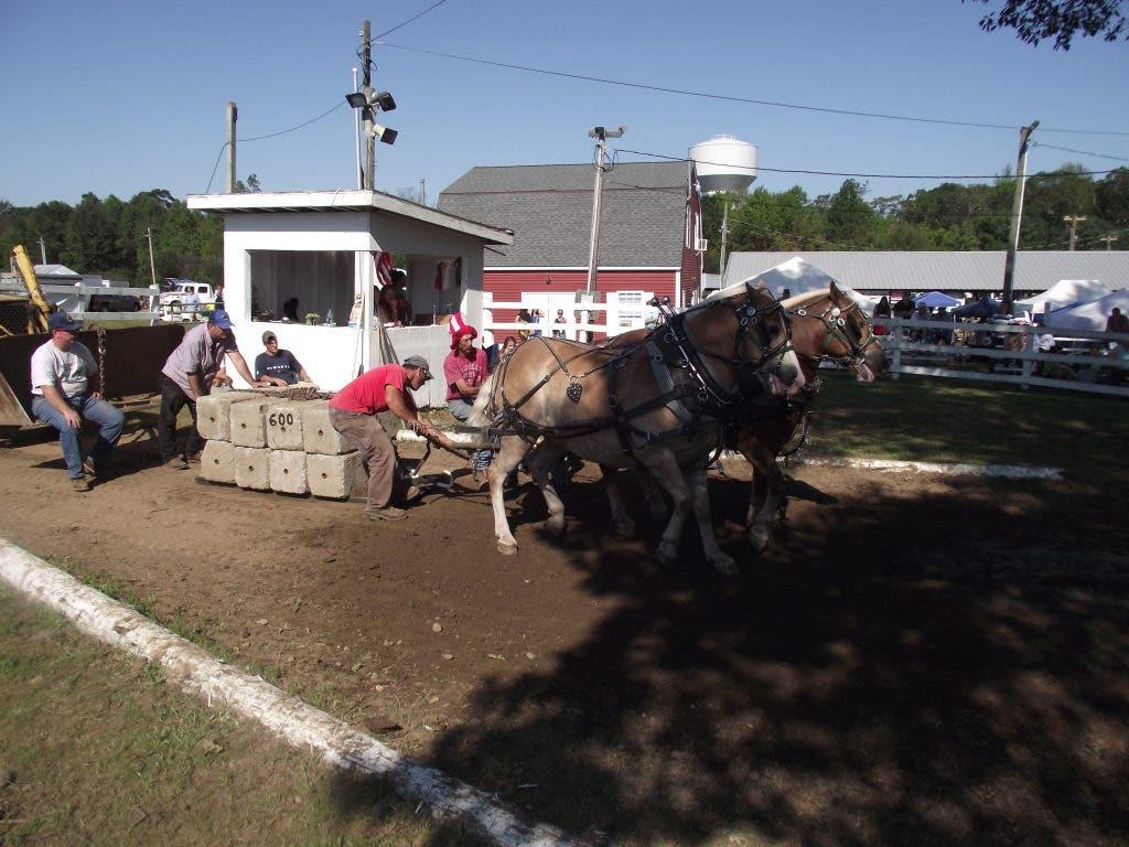 Fair Closes With Tractor Pulls Horses Rednecks Ledyard