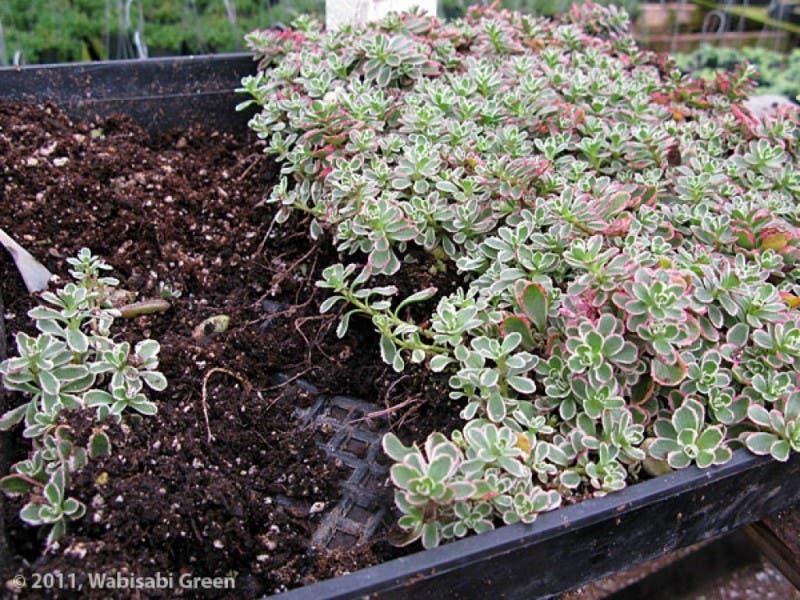 ... Vertical Garden Guru: Georgeu0027s Fortier Fantastic Botanical Creations   ...