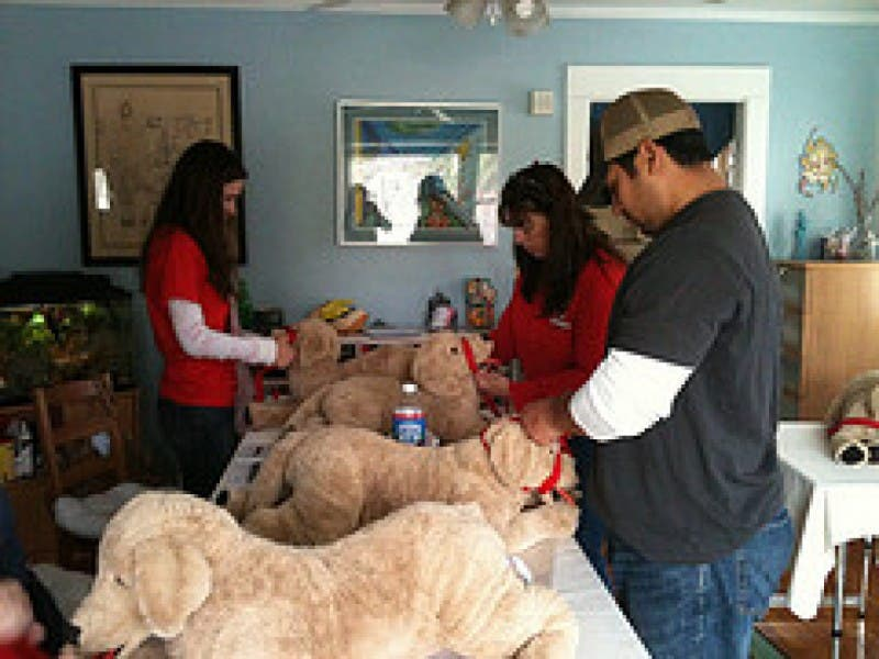 Petsaver Pet First Aid Cpr And Care Certification Class Venice