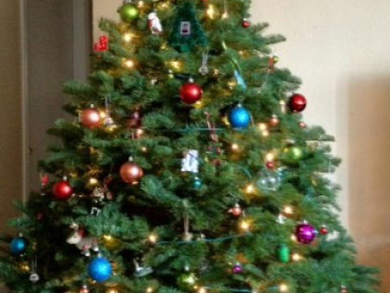 Christmas Tree Recycling Options In Tri-Valley, San Ramon