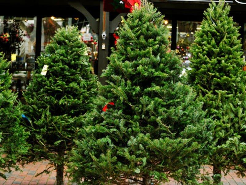 where to buy a christmas tree around newton - Best Place To Buy A Christmas Tree