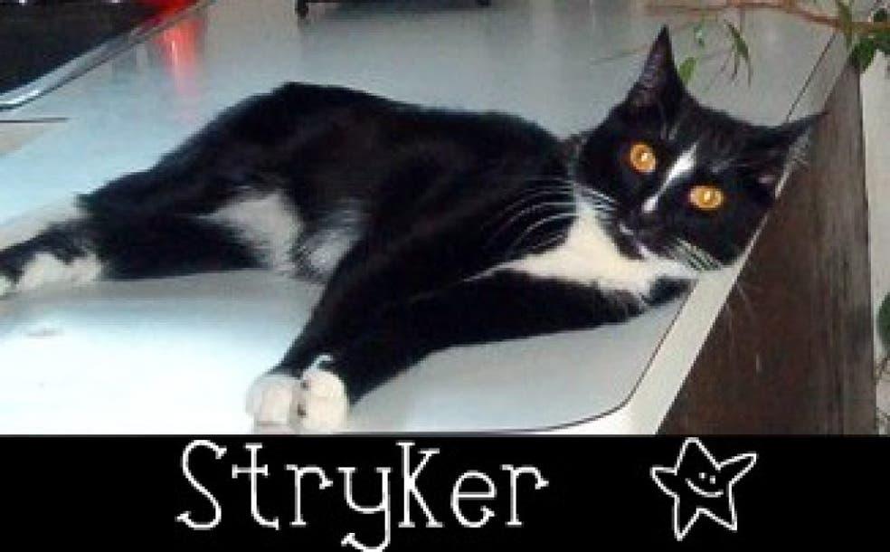 Bring Home Violet, Sunkist or Stryker | Paramus, NJ Patch