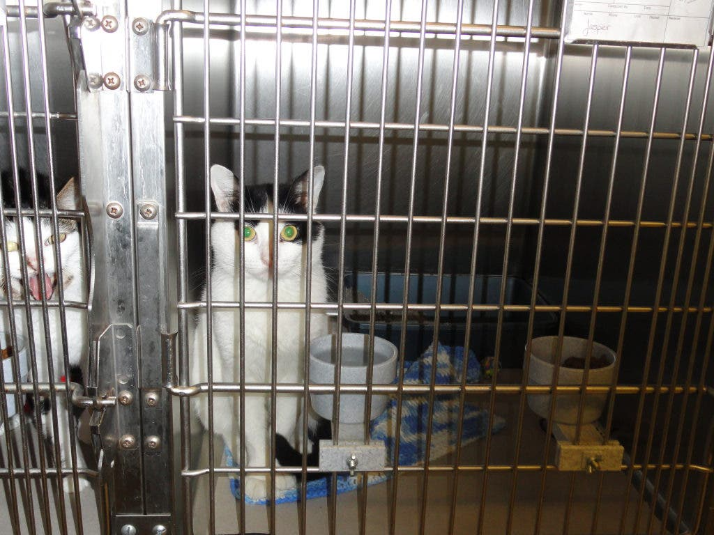 Par-Troy Pet Shelter Wants 'Nice Animals in Nice Homes