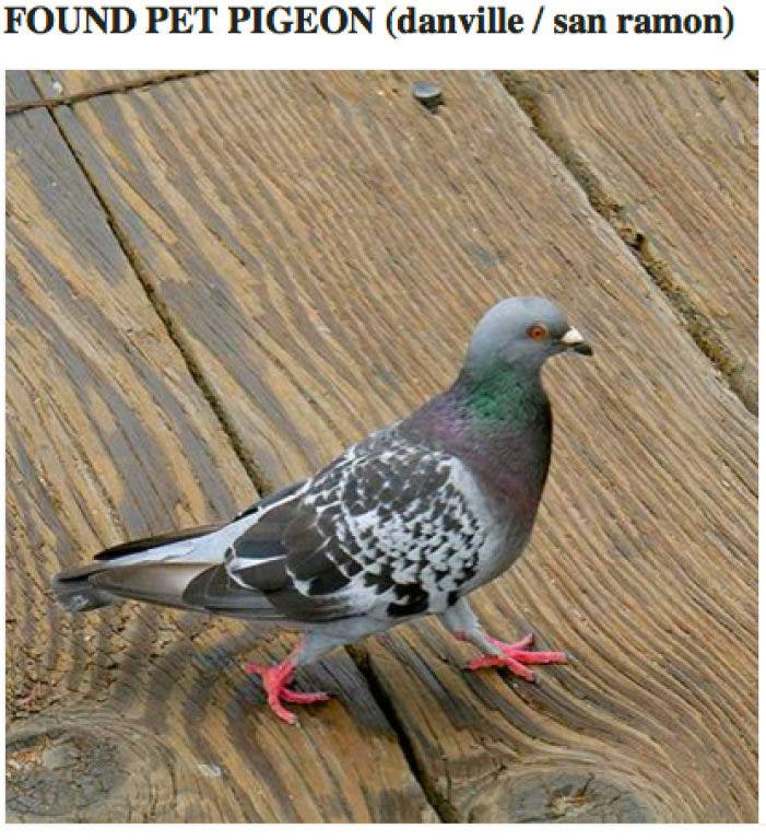 Lost & Found on Craigslist: Cell Phone, Dogs, Cat and Pigeon | San