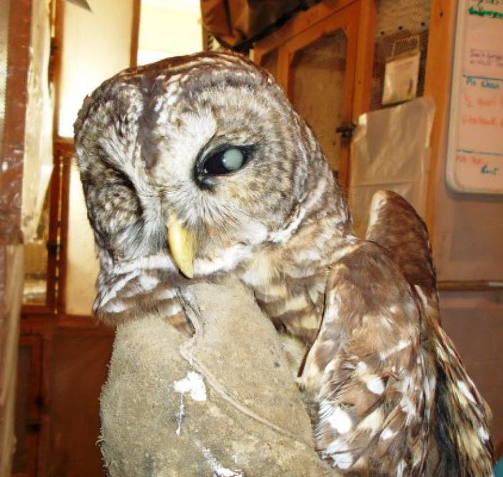 Animal Control Officers Rescue Owl In Mount Vernon Mount Vernon Va Patch