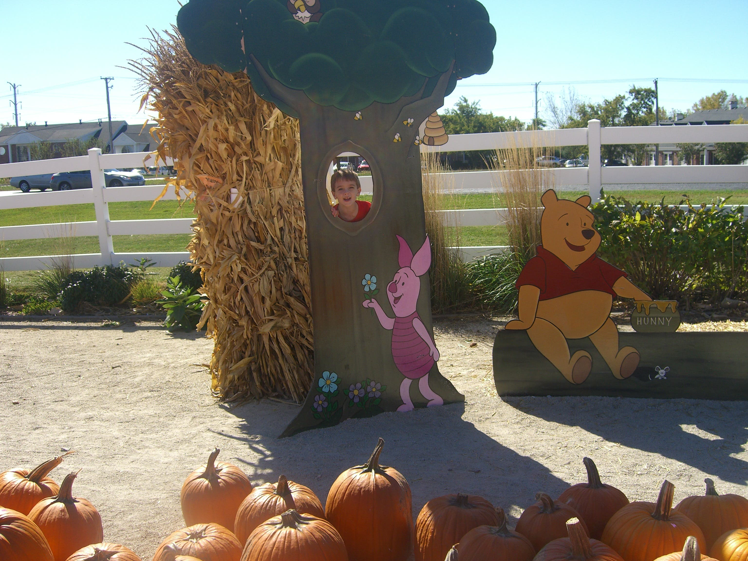 Goebbert S Pumpkin Farm Ready For Fall Barrington Il Patch