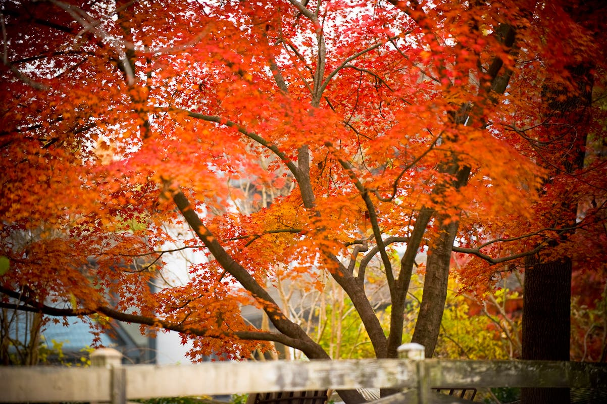 What S Your Favorite Thing About Fall In Danvers Danvers Ma Patch