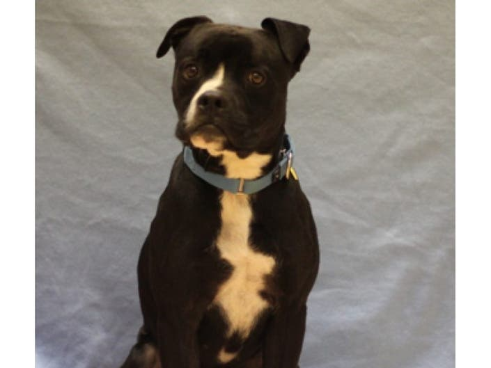 Adopt Me! Snuggles, Clancy, Nala, Pete | Naperville, IL Patch