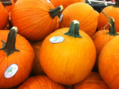 best pumpkin patches near woodstock il