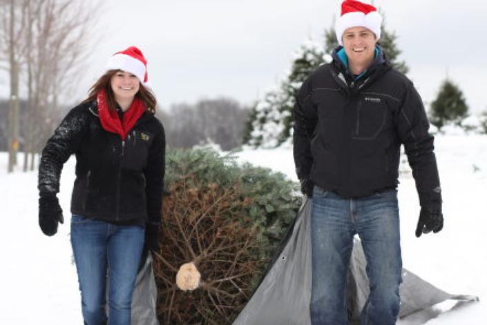 Find Christmas Tree Farms Near Park Ridge
