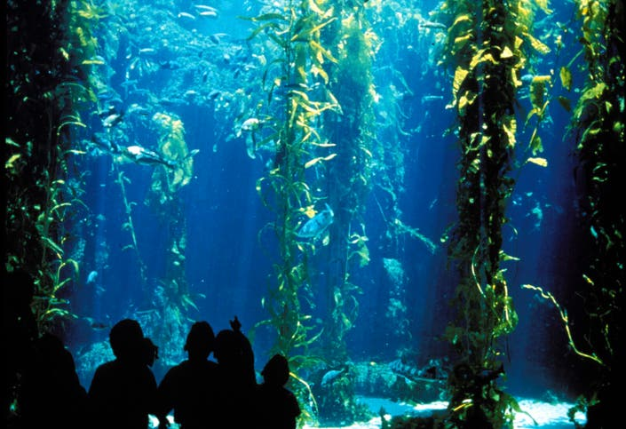 New Admission Prices at Birch Aquarium   La Jolla, CA Patch