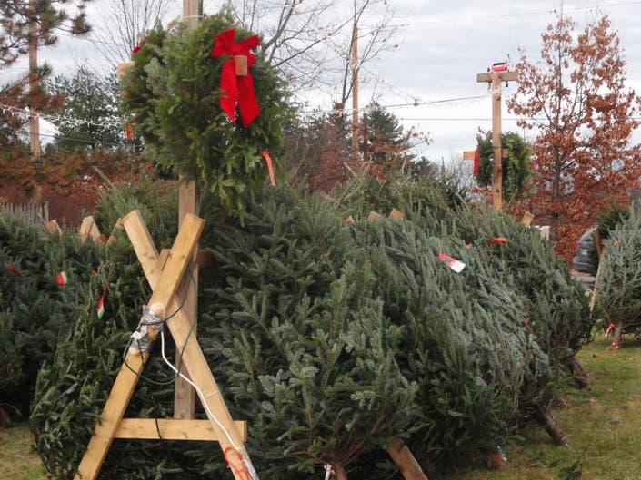 Guide to Christmas Tree Shopping in Merrimack | Merrimack ...