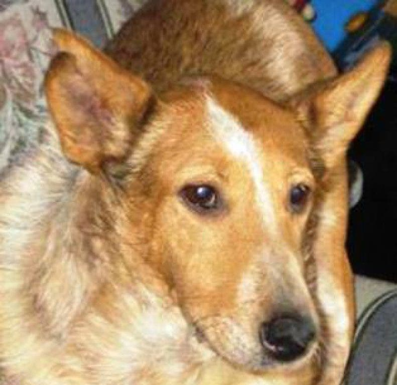 Success Stories: Rescue Dogs Who Found Homes Through Castle