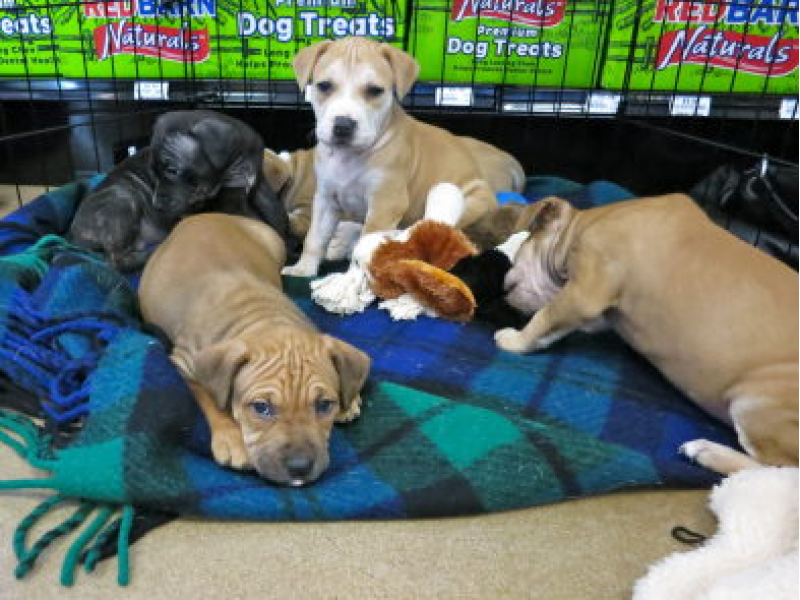 New Braintree Pet Store Raises Questions About Puppy Safety