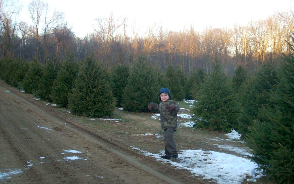 NJ's Cut-Your-Own Christmas Tree Farms