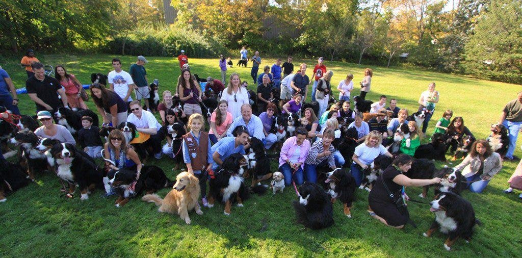 Ridgefield, CT Bernese Mountain Dog Parade | Ridgefield, CT Patch