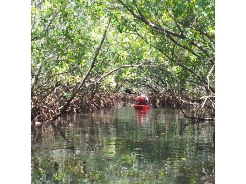 Paddle Weedon Island For A Fresh Perspective On Pinellas Countys