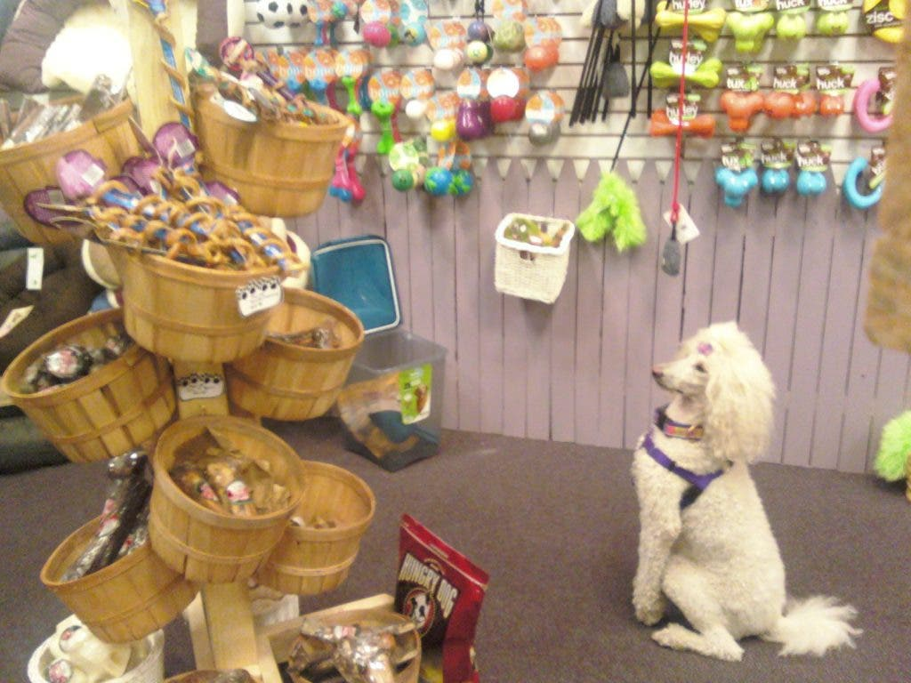 New Pet Store will Open in Palisades Center Mall to Promote