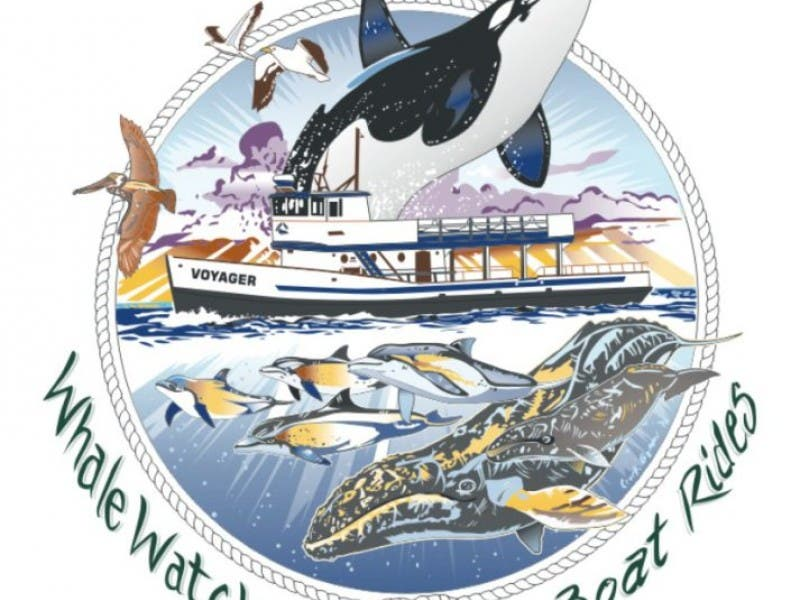 Whale Watching On The Voyager At Redondo Beach Marina