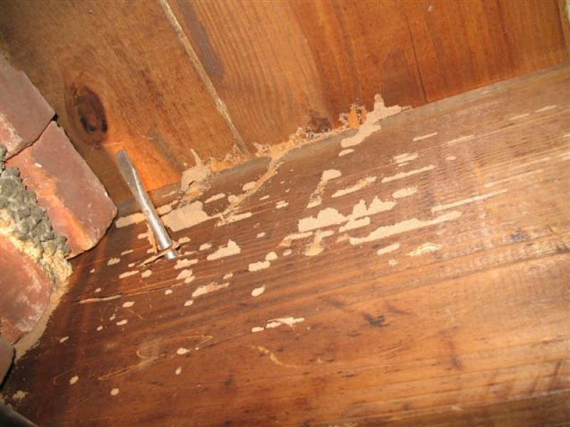 Merveilleux ... Bark Beetles And Termites Eat, Hibernate In Wood 0 ...