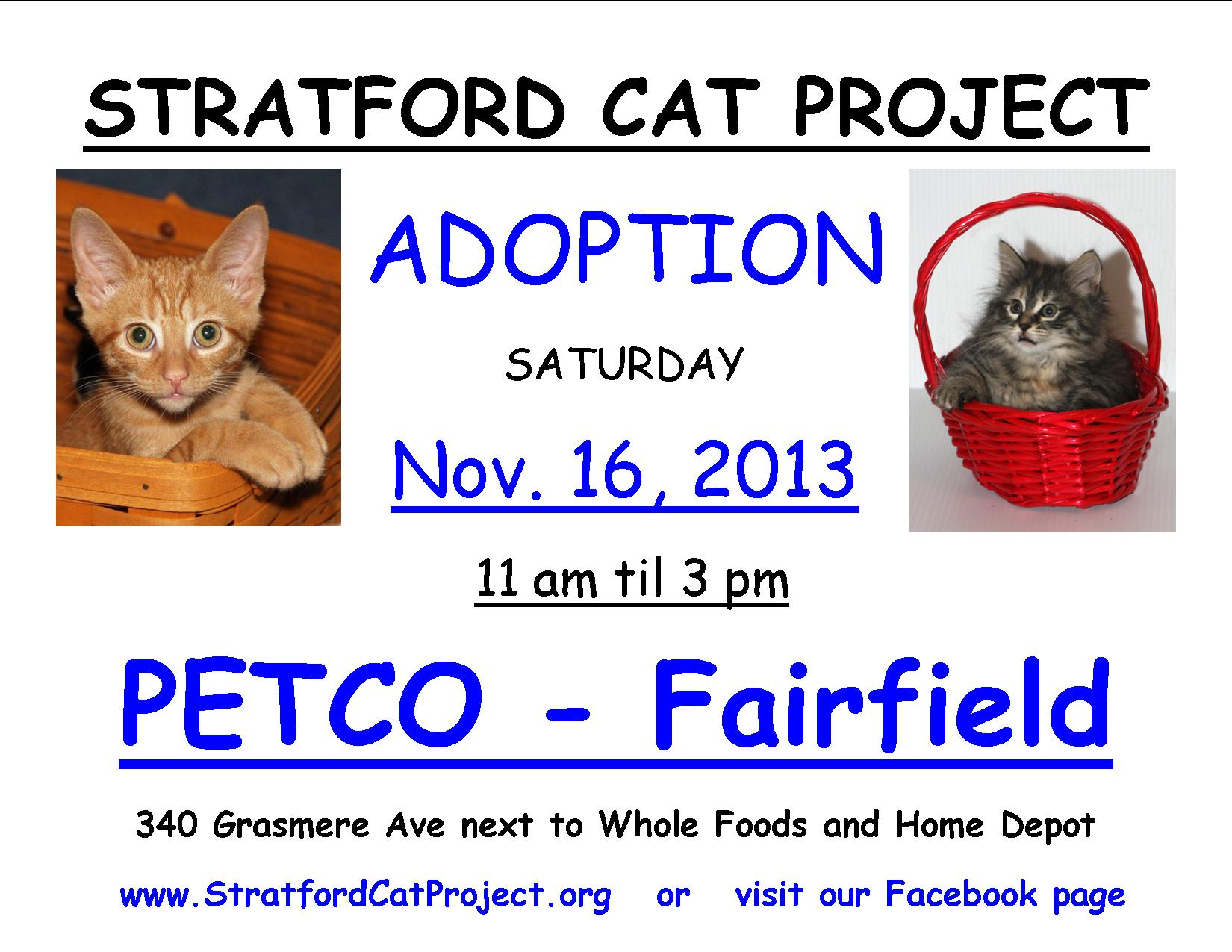Stratford Cat Project Cat Kitten Adoption At Fairfield Petco Fairfield Ct Patch