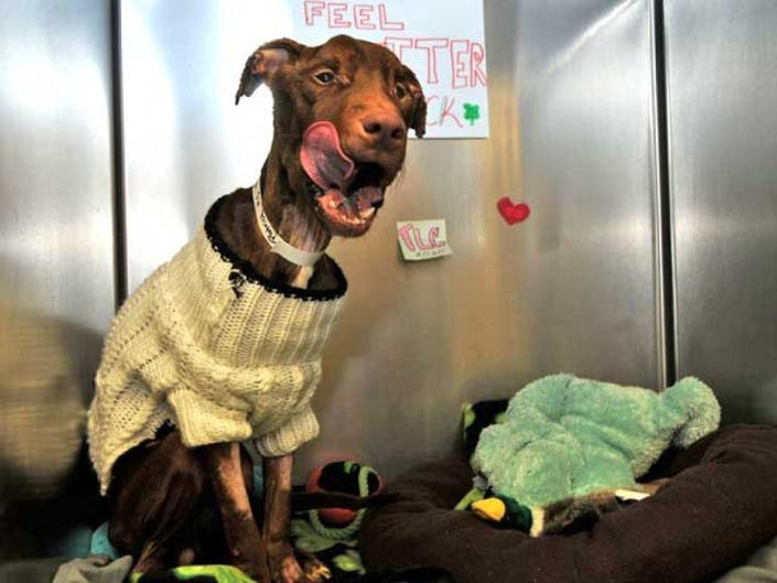 Patrick The Dog Stays In Tinton Falls Judge Rules Little