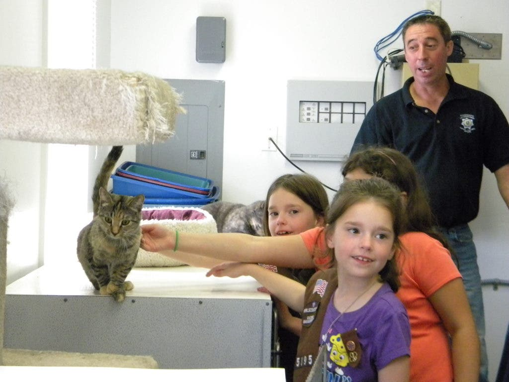 Girl Scouts Help Out Norton Animal Shelter Norton Ma Patch