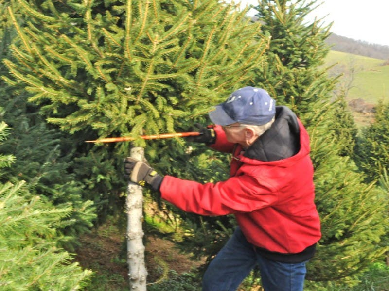 find and cut down your own perfect christmas tree 0