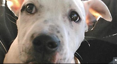 Online Petition Looks to Stop Pet Sales on Craigslist in