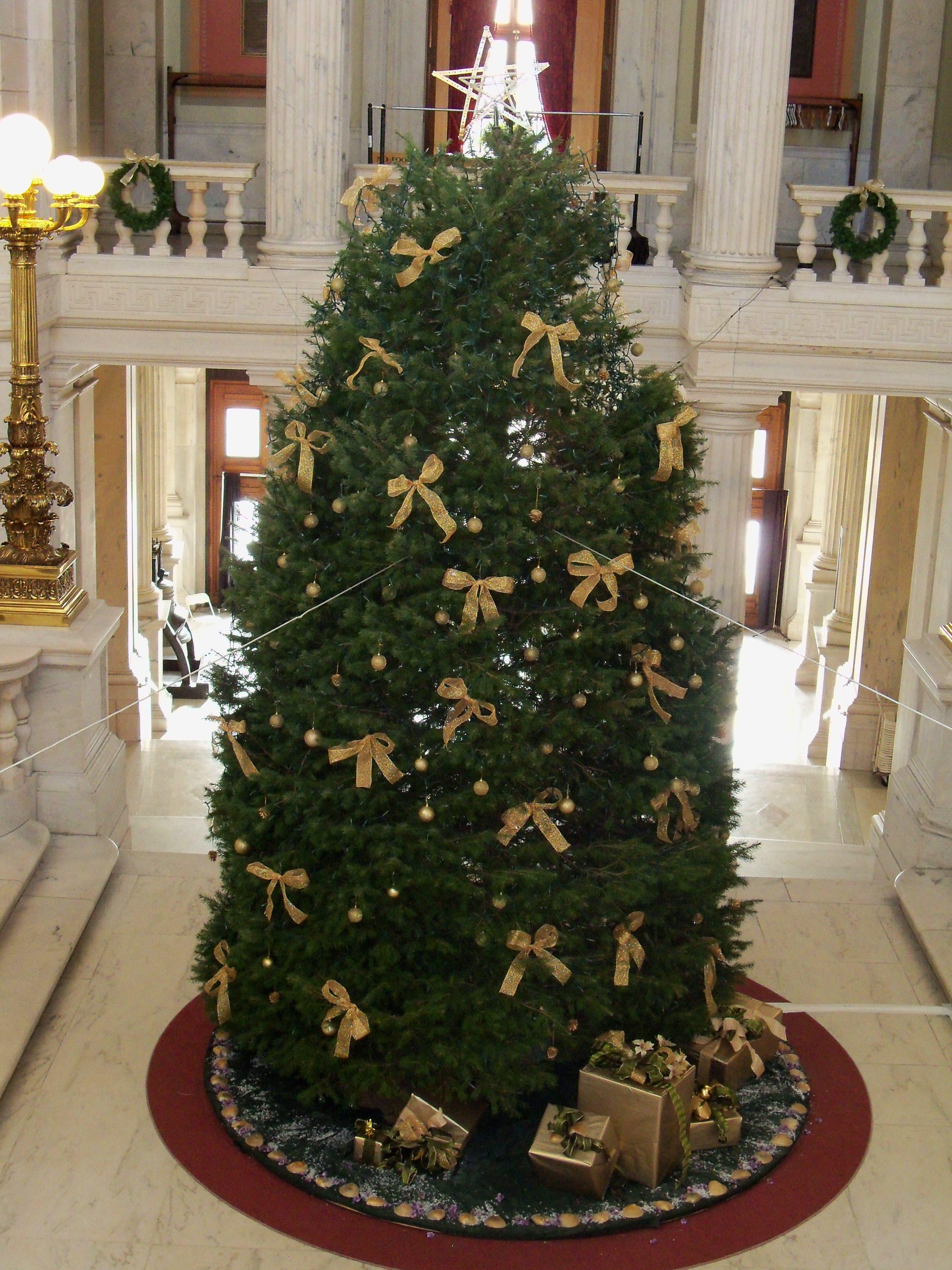 Pachet Brook Christmas Tree Lit At State House | Tiverton ...
