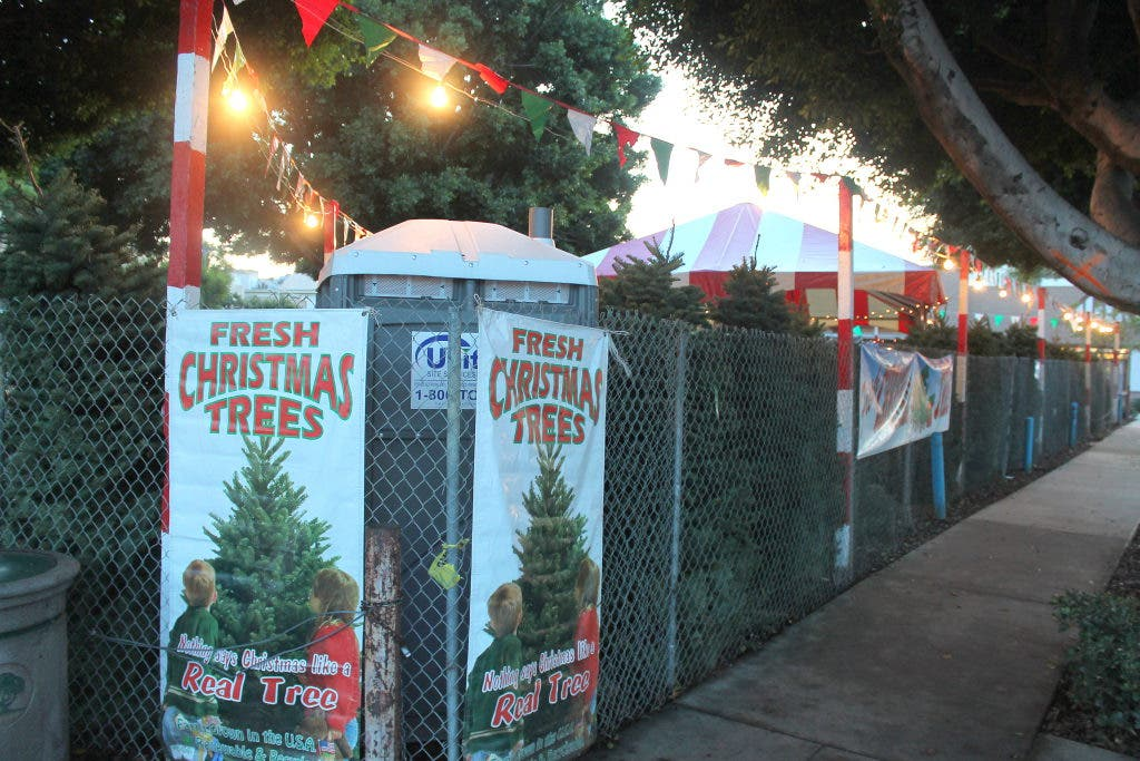 Christmas Tree Lot Opens on San Vicente