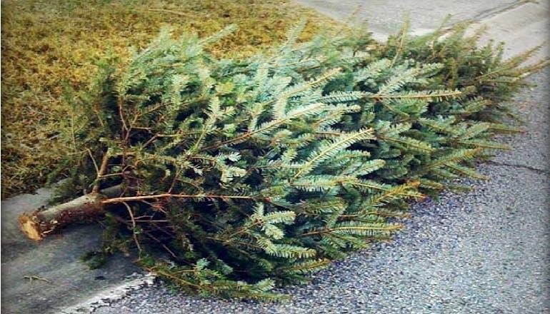 Christmas Tree Pick Up.Christmas Tree Pickup In New City New City Ny Patch