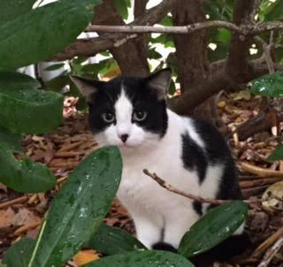 Timid Black & White Cat Found in Pawcatuck | Stonington ...