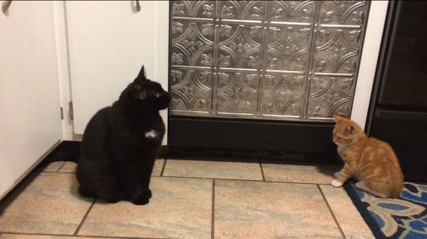 Black Cat Found in Waterford | Waterford, CT Patch