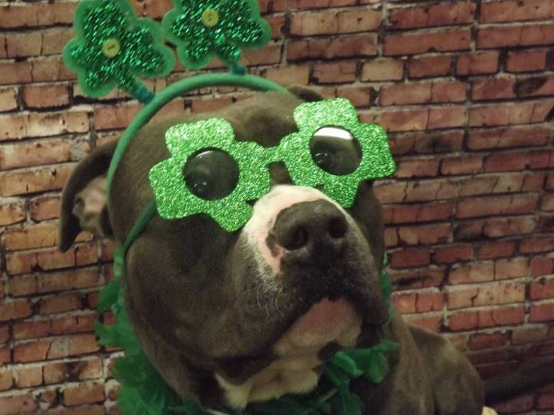 Image result for happy saint patrick's day dog cats