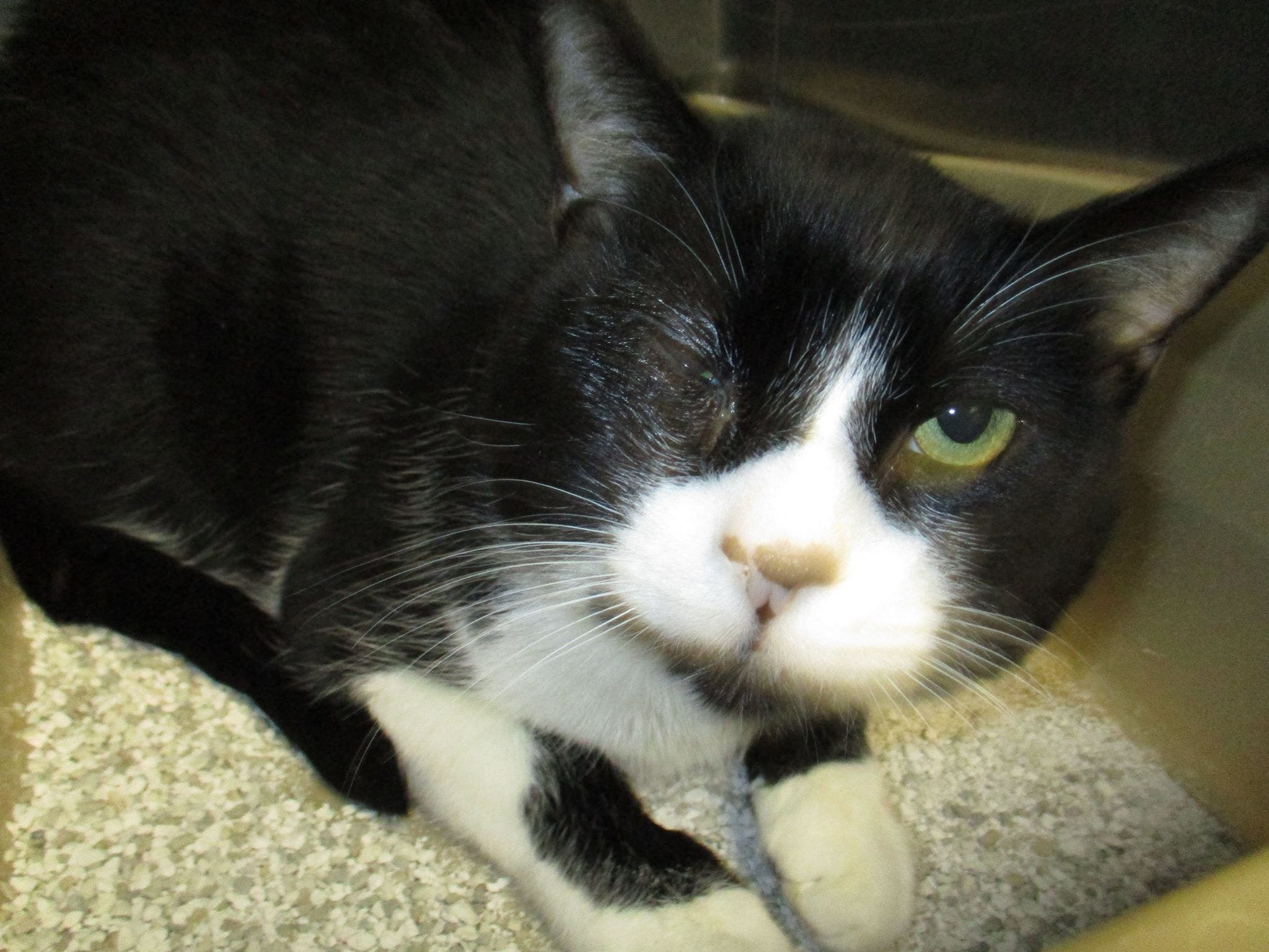 Funds Sought For Middletown Cat Undergoing Eye Surgery
