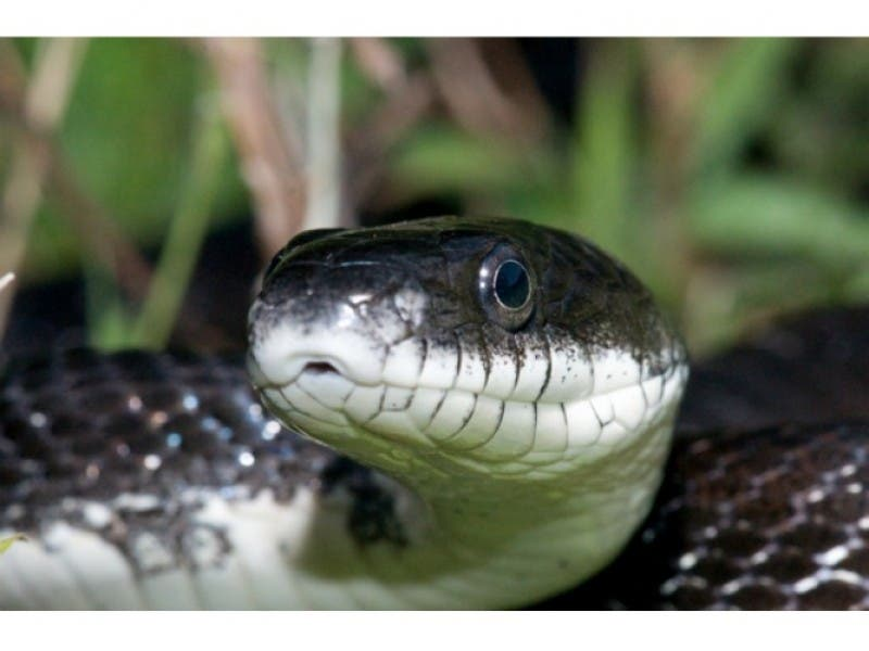 Lawsuit Claim Snake House Can Be Made Livable