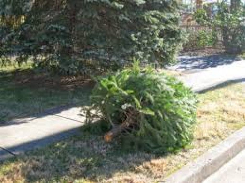 How To Dispose Of Your Christmas Tree In Montgomery Co