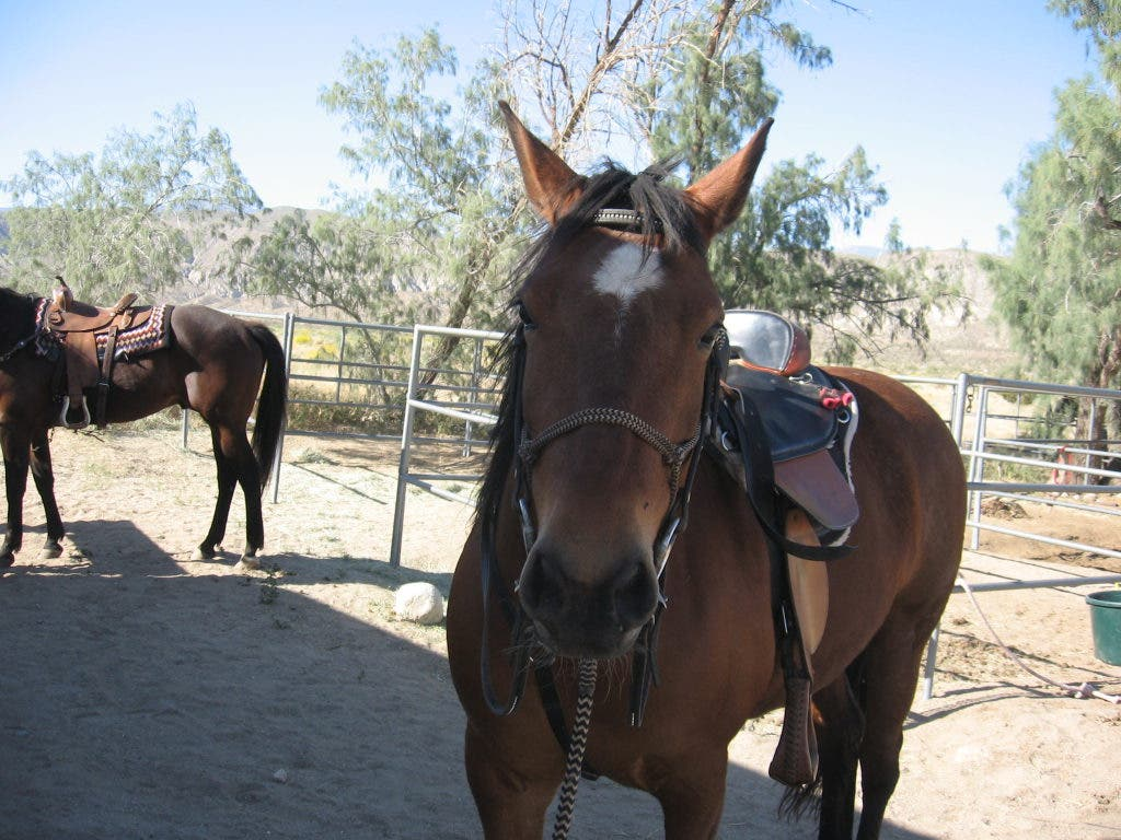 Horse Games: Games You Can Play on Horseback | Poway, CA Patch