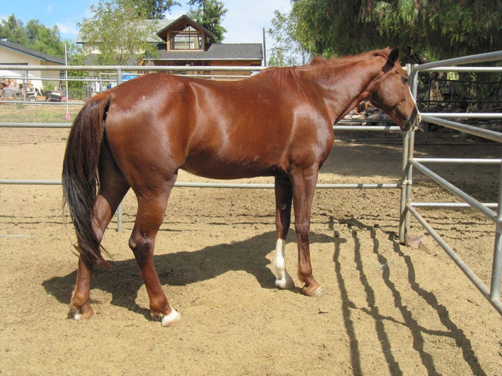 Horses and Tack for Sale | Ramona, CA Patch