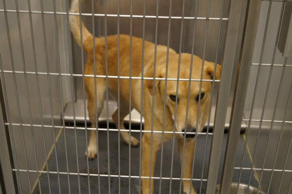 Pets Currently Available for Adoption at Barrow County