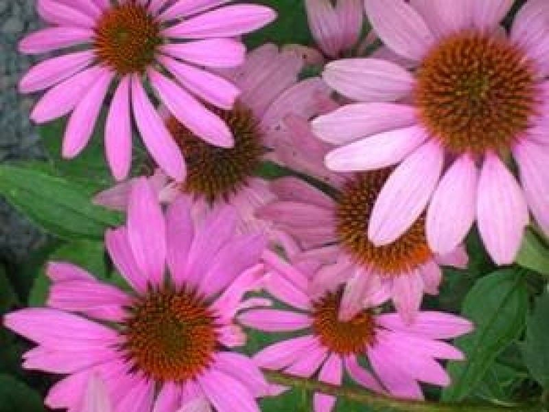 Harvest a Bountiful Garden with Native Plants
