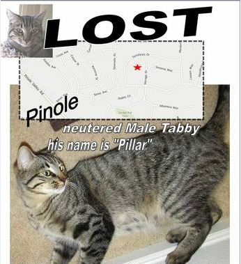 Lost & Found On Craigslist: Lost Cats, Missing Dogs, Found ...